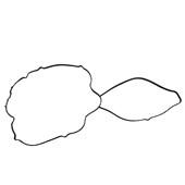 Junta da Tampa de Válvulas 010.051 Ford Sigma (Fiesta / Focus) - Cód.3912